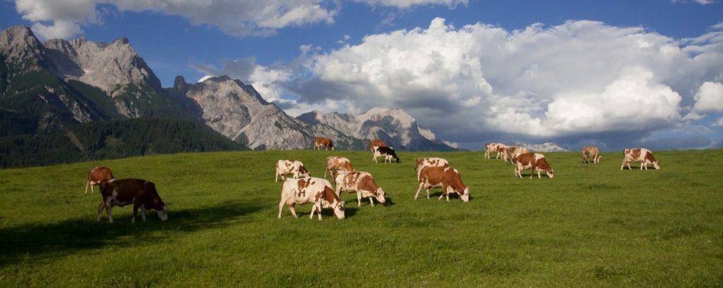 Österrike på sommaren